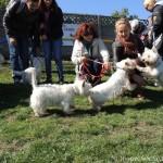Intalnire Westie Cluj @ DogMaster