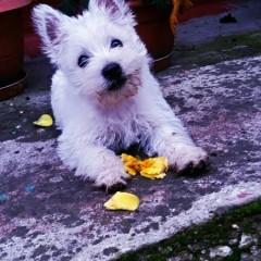 Daisy, femela, Cluj-Napoca