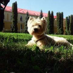 Scotch, mascul, Cluj-Napoca