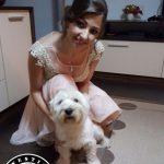 Westie Oradea - Bonzo