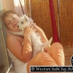 Westie Cluj - Rufus