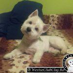 Westie Cluj - Trusy