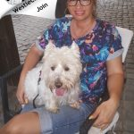 Westie Targu Mures - Wendy